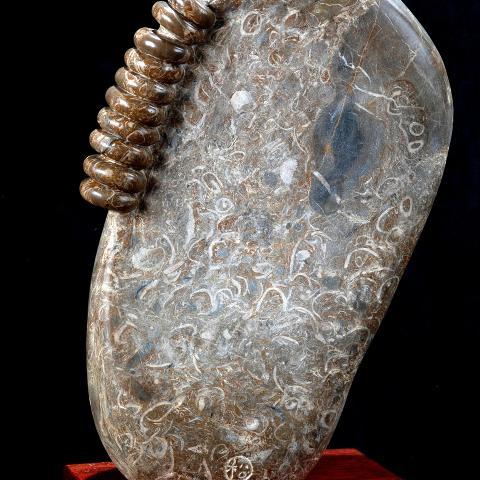 6.陳  松E世代的耳環H35CM貝殼化石